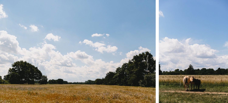 Zwei Bilder der Weizenfelder und Pferde vom Hof Eggers in Hamburg Kirchwerder