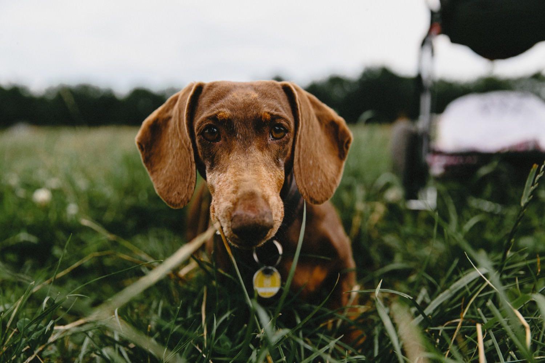 Ein Hund schaut in die Kamera