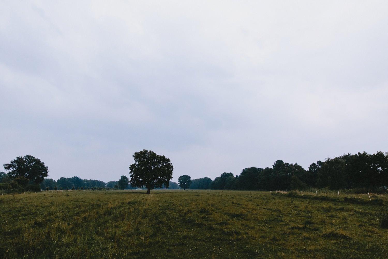 Ein Blick über die Weide mit der Eiche unter der vorher die Trauung stattgefunden hat